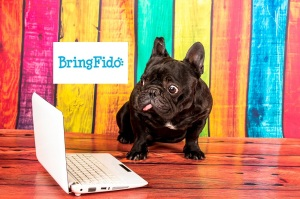 frenchie bring fido