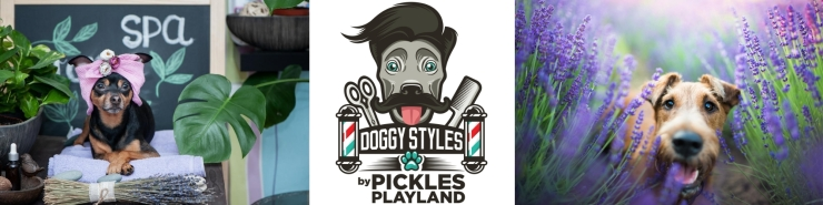 Doggy Styles Kirkland Dog Grooming Doodle Kirkland Dog Daycare Doggy Daycare Pickles Playland Lili Bear Bakery Moxie's Pet Service Kirkland Dog Walker 6
