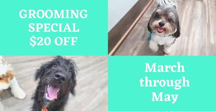 GROOMING SPECIAL $20 OFF